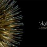 Mal-floral-web