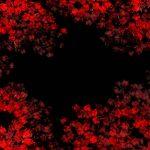 Noir Floral 05, 2017, Impression numérique de type C sur papier archive   92,5 x 62 cm (36 x 24 pouces) et 57 x 38 cm (22 x 15 pouces)  Édition de 3, 1 A/P