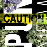 Noir Floral 10, 2017, Impression numérique de type C sur papier archive   51 x 38 cm (20 x 15 pouces)  Édition de 3, 1 A/P
